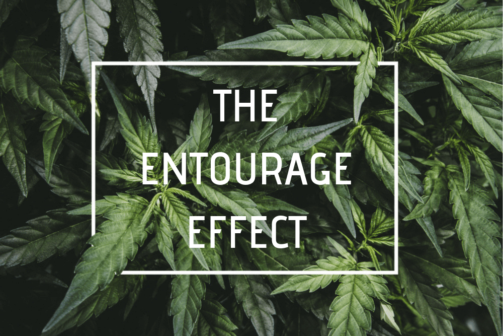 THE ENTOURAGE EFFECT (1)